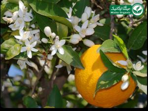 عرق ارگانیک بهار نارنج