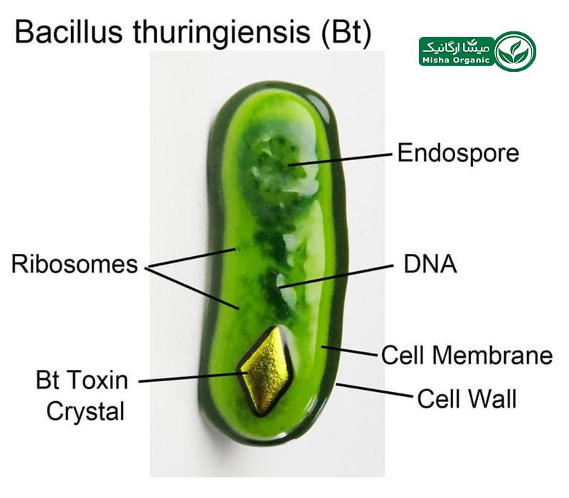 باکتری bt به عنوان حشره کش طبیعی