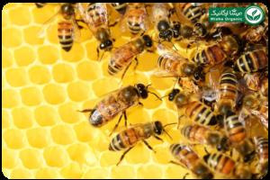 عسل کنار ارگانیک اورازان