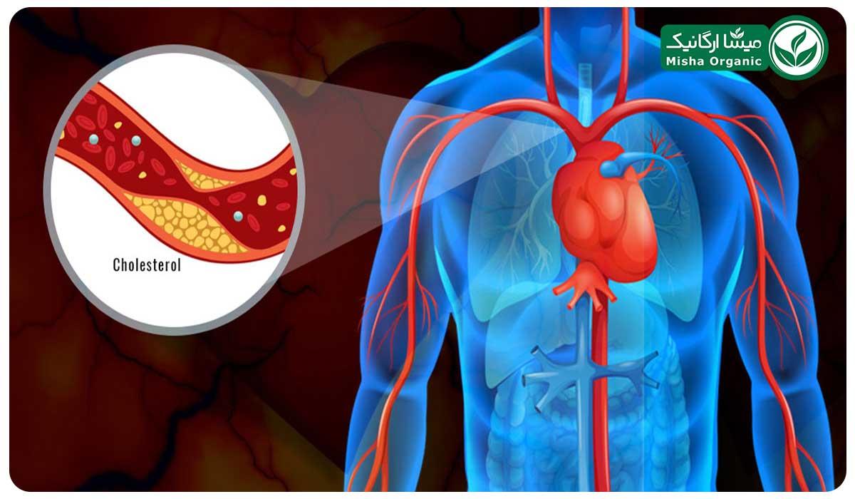 گردو و کاهش کلسترول خون