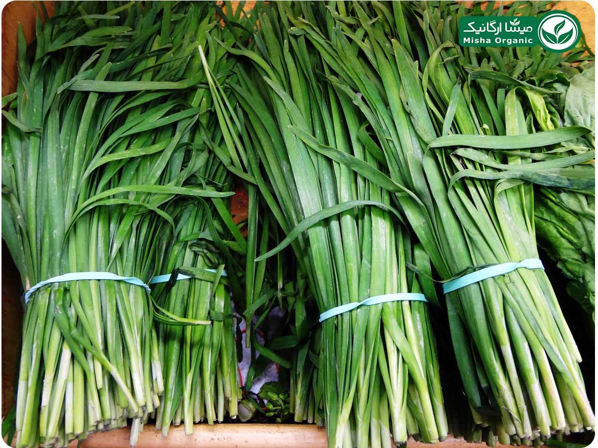 سبزی تره ارگانیک آبگینه