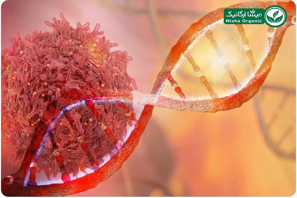 زنجبیل و درمان سرطان